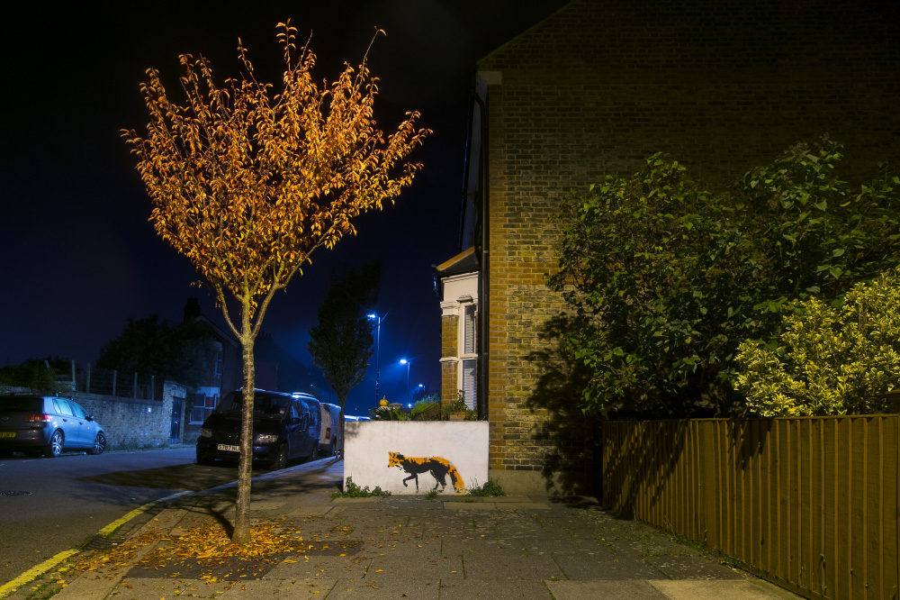 creeping through the neighbourhood